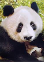 Divulga��o/WWF