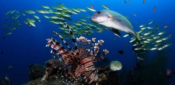 Fotografia submarina mostra várias espécies de peixes no mar do Timor Leste