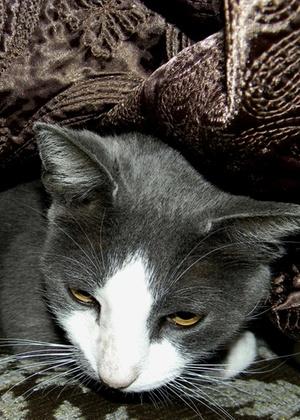 Cinco anos depois de seu desaparecimento, durante a passagem do furação Katrina, o gato Scrub voltou aos braços de uma família do Mississippi, nos EUA