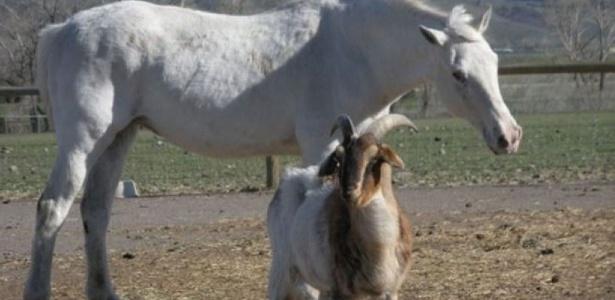 Sissy, uma égua cega, recebe cuidado e escolta de cinco cabras e cinco ovelhas