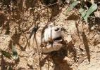 Morre cadelinha que havia sobrevivido a 40 tiros na cabeça em Malta