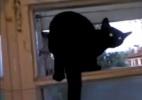 Gato ator late (!) em janela e quando é filmado volta a miar