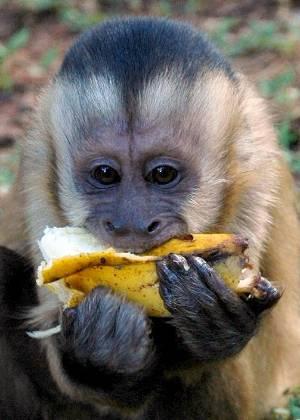 Resultado de imagem para alimentando macaco areião