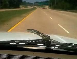 Cobra vira carona indesejada em viagem de família. Não, não estamos nos referindo à sogra