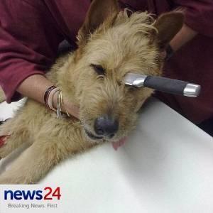 Cadelinha Bella foi operada e passa bem
