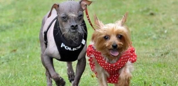 Cachorro mais feio do Reino Unido ao lado da namorada fofinha