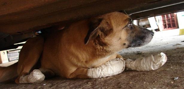 Cachorra fere as quatro patas após ser amarrada a moto e arrastada por porteiro em Araçatuba (SP)