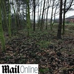 O bosque de Coulby Newham, no nordeste da Inglaterra, foi coberto com esterco de porco
