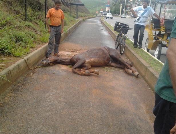 Cavalo que puxava charrete em Poços de Caldas (MG) tomba de cansaço e comove moradores da cidade