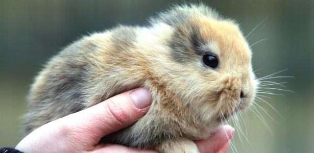 O coelho Til, em foto na mão de um dos funcionários do zoológico