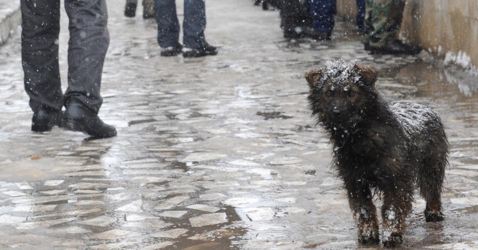 Cachorro fica todo molhado durante tempestade de neve em Bishkek, capital do Quirguistão