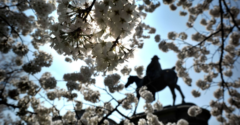 Flores de cerejeiras começam a desabrochar em Washington, nos Estados Unidos. Ao fundo, estátua de Winfield Scott (1786 ? 1866). Este ano fazem 100 anos que o Japão deu a flor de presente aos EUA