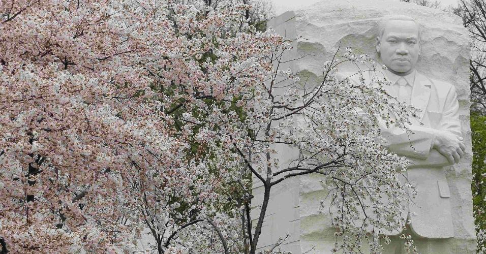 Pessoas aproveitam o sol e apreciam a beleza das flores de cerejeiras, que começam a desabrochar em Washington, nos Estados Unidos. Este ano fazem 100 anos que o Japão deu a flor de presente aos EUA. Ao fundo, o Memorial de Martin Luther King