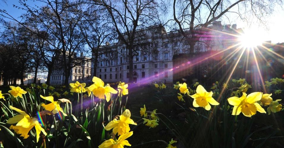 Flores compõem a paisagem do parque St James, em Londres, no Reino Unido. Ao fundo, o prédio do Tesouro inglês onde o chanceler britânico, George Osborne, falará sobre orçamento