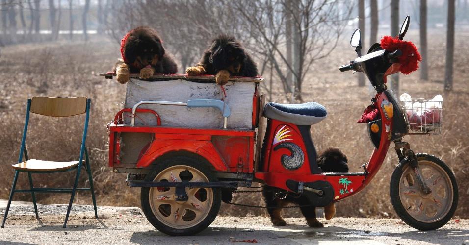 Homem tenta vender cachorros em estrada próxima a Pequim, na China