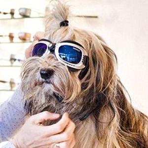 Cãozinho prova óculos. Qual será que lhe cai melhor?