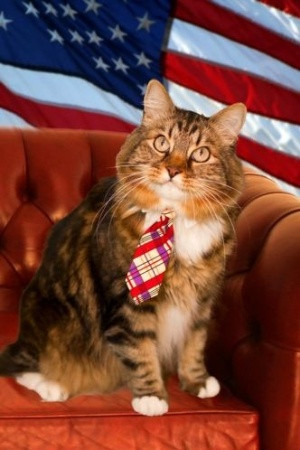 O gato Hank decidiu virar pol&#237;tico e quer uma vaga no Senado americano, pelo Estado da Virg&#237;nia. O felino afirma conhecer bem os problemas da popula&#231;&#227;o, afinal, j&#225; morou na rua. Seu lema de campanha &#233; &#34;leite em todas as tigelas&#34;. Sua campanha j&#225; conta com p&#225;gina no Facebook e no Twitter. Al&#233;m disso, Hank j&#225; tem uma s&#233;rie de apoiadores e correligion&#225;rios e j&#225; arrecadou US$ 250