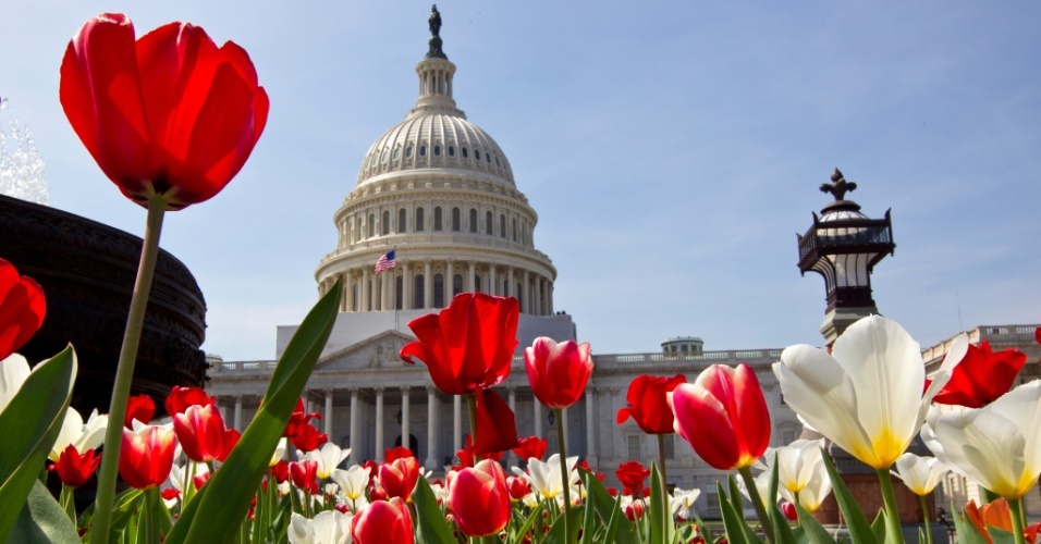 Flores desabrocham em frente ao Capit&#243;lio, em Washington, nos EUA
