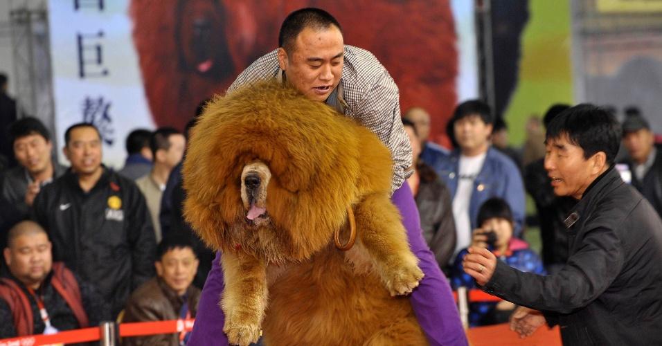 Homem segura um cachorro mastiff tibetano durante um concurso na cidade de Shenyang, na China