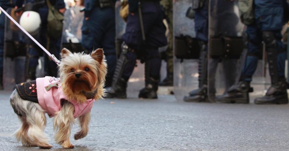 Cão confere desfile militar que marca o Dia da Independência da Grécia, em Atenas