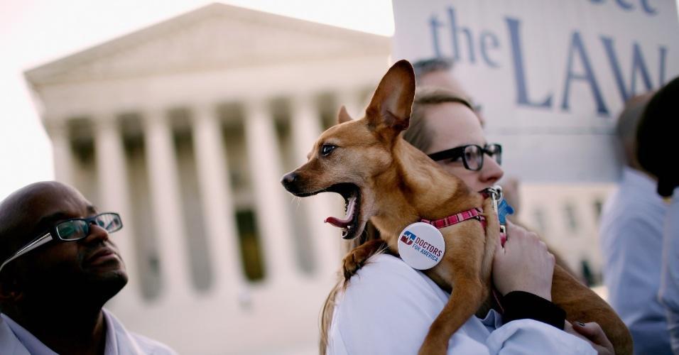 Com a dona, cão Ellie participa de protesto em apoio a lei de saúde nos EUA