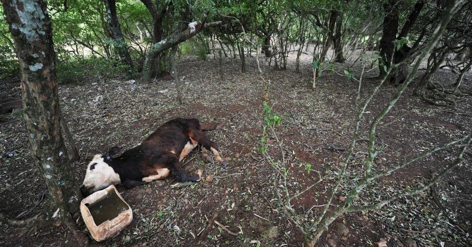 o município de Capão do Cipó registra perda de animais, mortos em função da seca