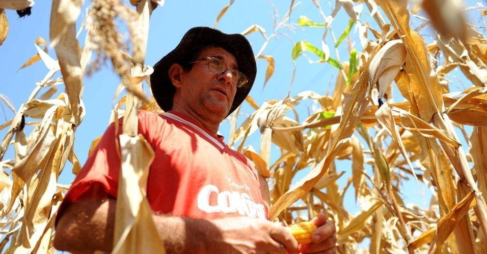 Produtores registram perdas em suas lavouras em consequência da estiagem que atingem a região de Planalto Alegre, em Santa Catarina