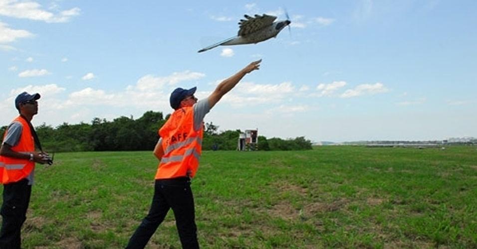 Funcionários usam falcão-robô para espantar aves de aeroporto