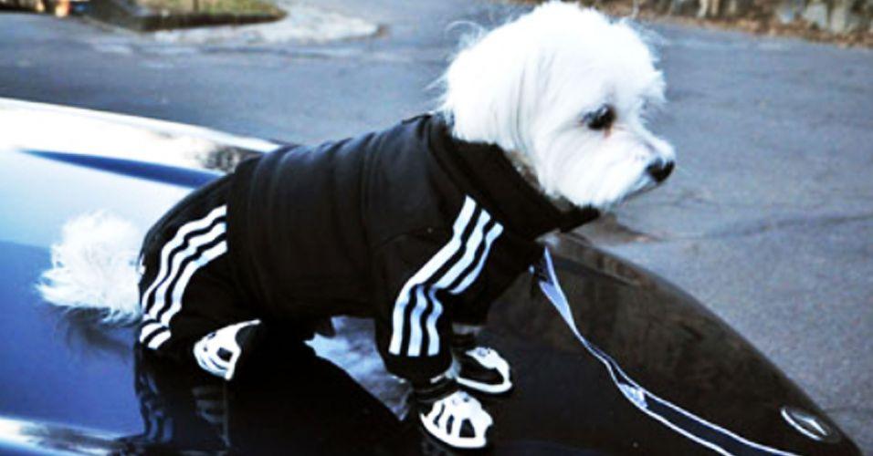 Fitness-dog