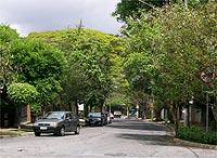Viva as ruas arborizadas!