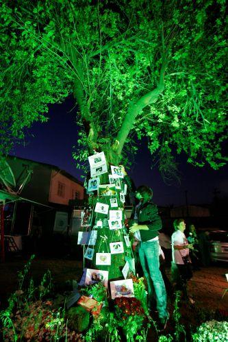 17.jul.2008 - Árvore que sobreviveu à queda do avião foi enfeitada com fotos das vítimas