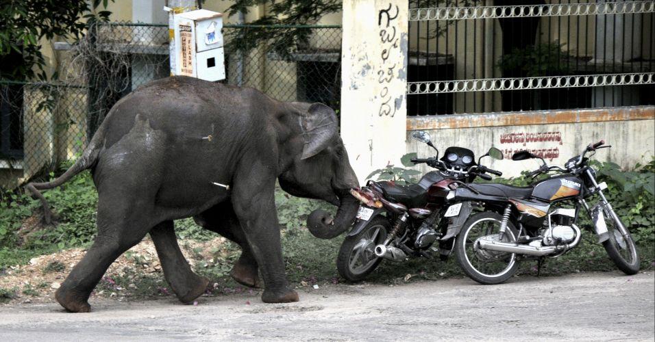 Таиланда. Как слоны занимаются мастурбацией. Опубликовано 9 июня…