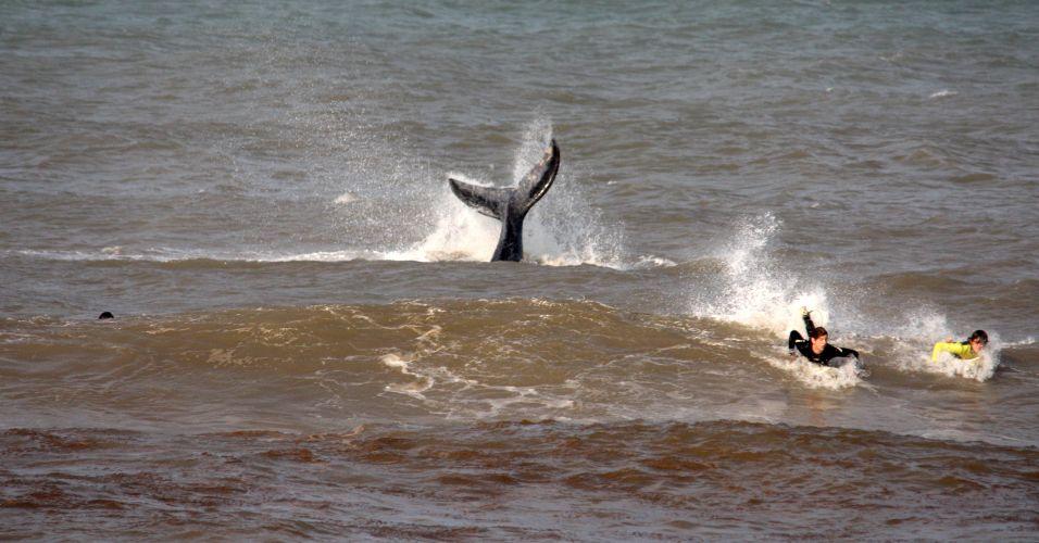 Baleias no Rio Grande do Sul