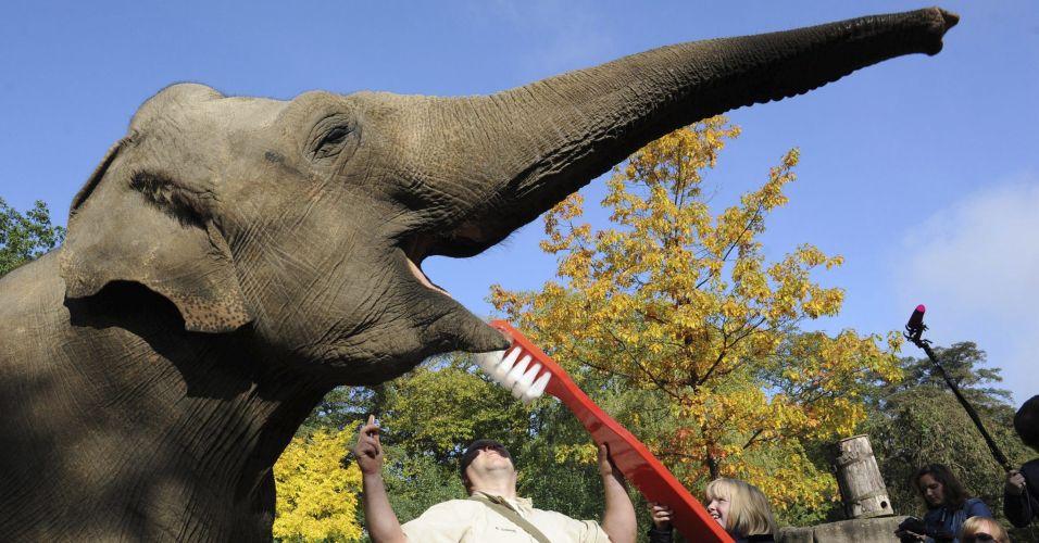 Elefante alemão