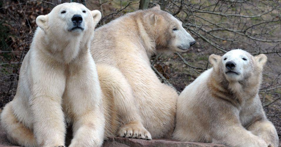Zoológico na Alemanha