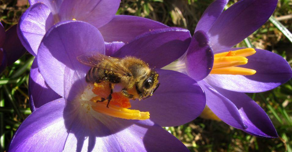 Primavera (Alemanha)