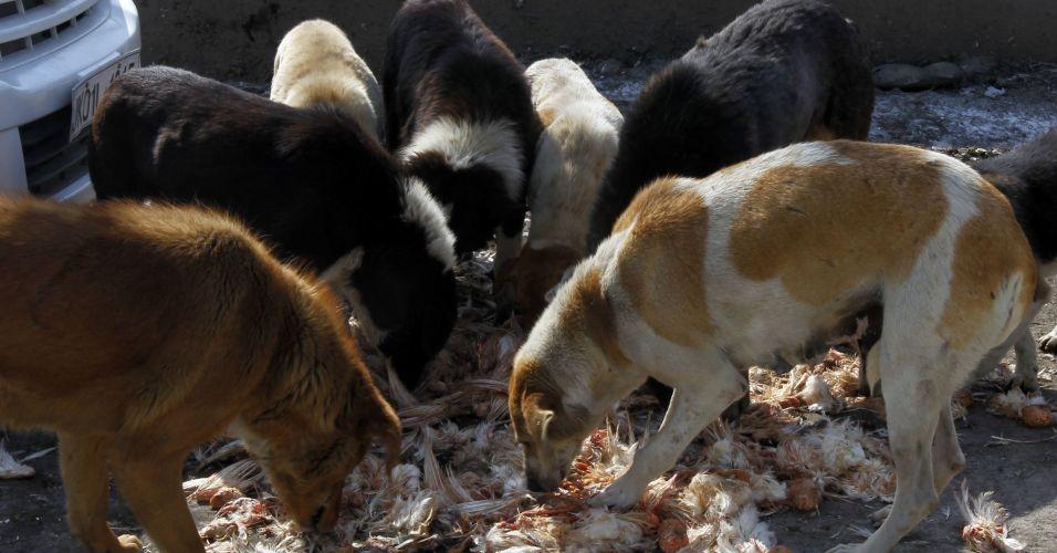 Cachorros na Índia