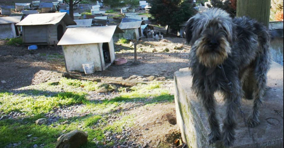 ONG abriga 1.800 animais abandonados