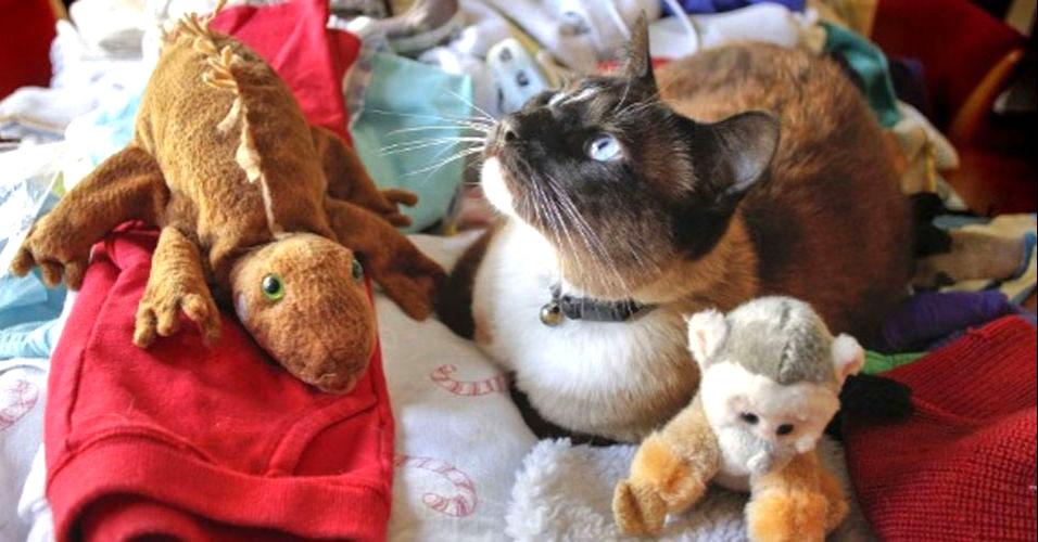 Gato ladrão é surpreendido