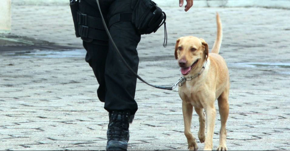 Labrador Colt vira farejador da pol&iacute;cia