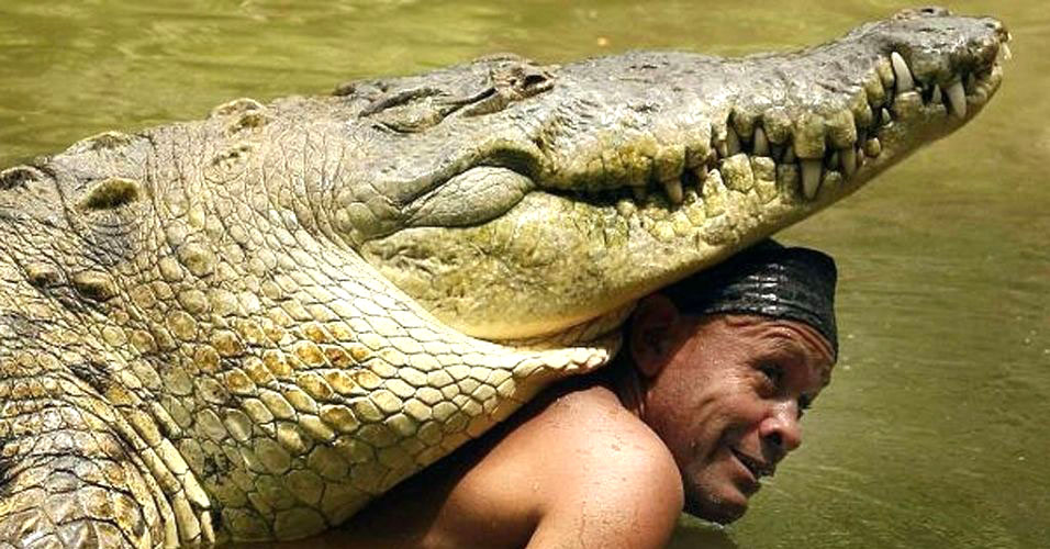 Crocodilo gigante vira amigo de costarriquenho