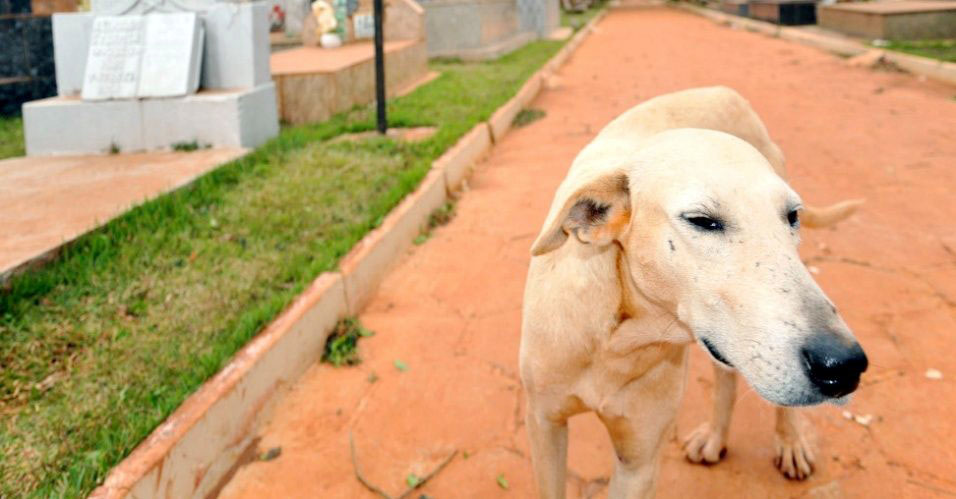 Cão Rambo guarda túmulo de dono