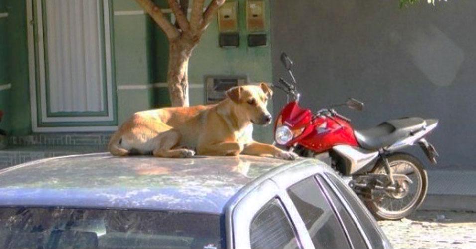 Lassie baiana vira mascote de policiais
