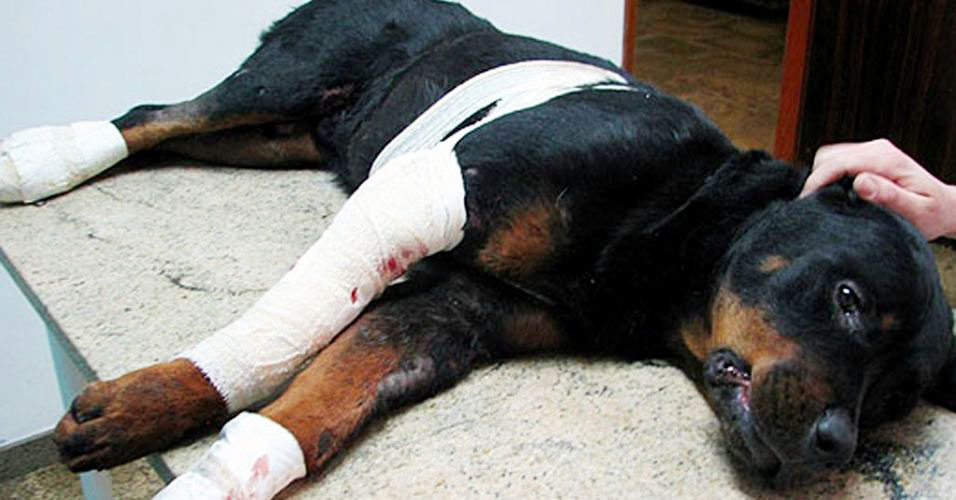 Rottweiller Lobo morre ap&oacute;s ser arrastado