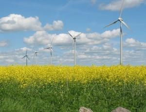 Seguradoras começam a investir em modelos de tecnologia verde, como a energia eólica (foto)