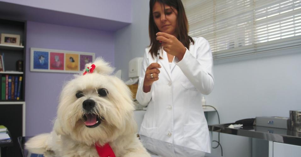 Veterinária, cachorro, profissão, médico, emprego