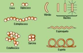 Bactérias 2 Estrutura Modo De Vida E Classificação Uol