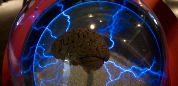 """Montagem da exposição """"Cérebro - O mundo dentro da sua cabeça"""", em São Paulo"""