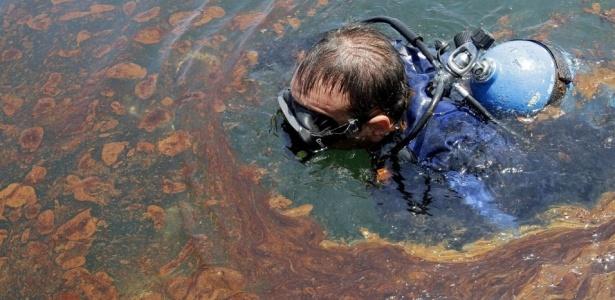 Fotógrafo mergulha para tirar fotos submarinas no litoral de Venice, na Louisiana; <b>VEJA MAIS</b>