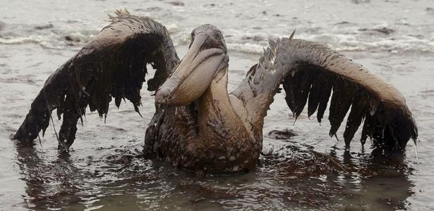 Ao todo, mais de 600 espécies animais estão ameaçadas no golfo do México; <b>VEJA MAIS</b>